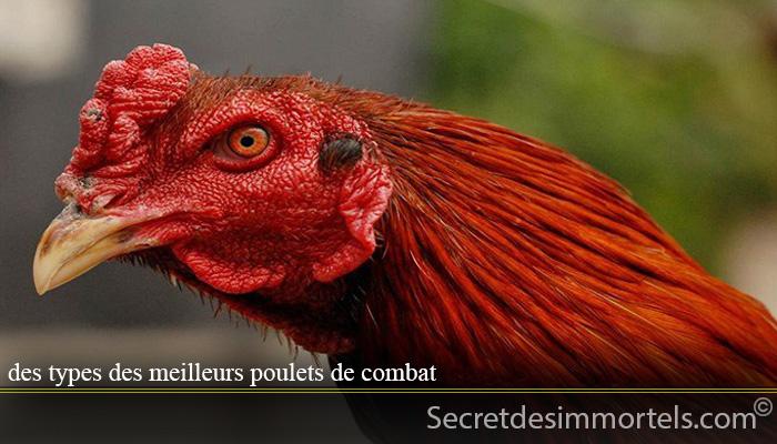 des types des meilleurs poulets de combat